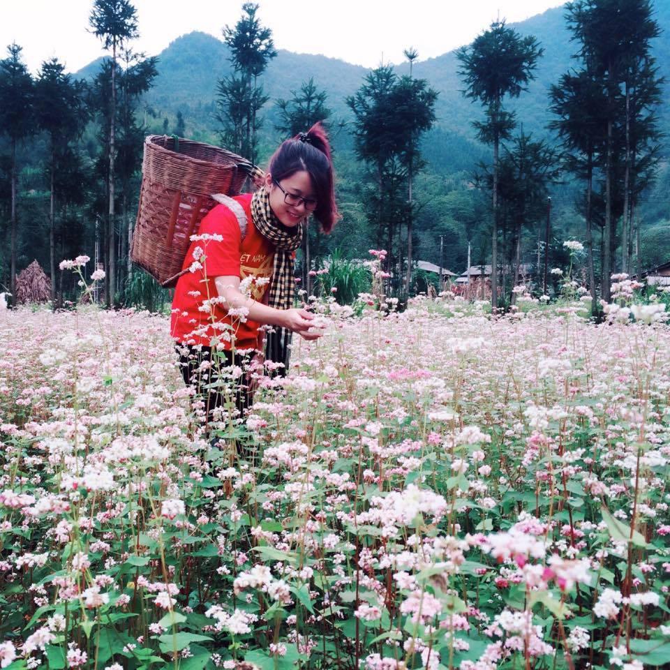 Hotgirl bên cánh đồng tam giác mạch